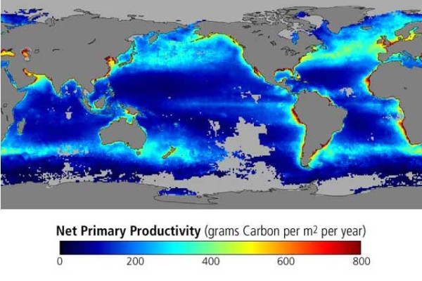 ocean productivity