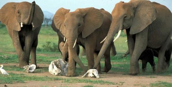 religious elephants