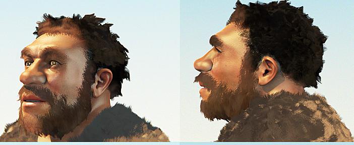 Homo_neanderthalensis